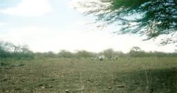 Terreno em Gurjão - no Estreito
