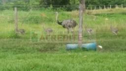 Fazenda 32 Alqueires no Município de Paraíso do Tocantins próxima a Palmas