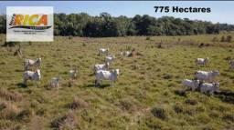 Fazenda com 775 Hectares à venda em Humaita/AM-Cód.FA0127