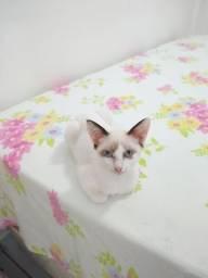 Linda gatinha para adoção! CASTRAÇÃO GARANTIDA
