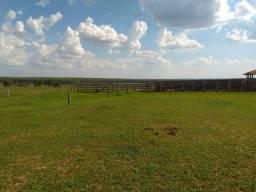 Fazenda 210 alqueires paulista - Três Lagoas - F111619