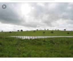 Procuro por pasto pequeno de pecuária em Olímpia - aluguel mensal