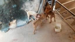 Doacao de cachorrinho vao fazer dois meses dia 21 de setembro