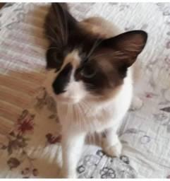 Doa-se gato macho (doação responsável)