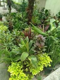 Lindas plantas lote lindo bastante variedades a sua escolha