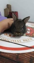 Vendo lindos filhotes de coelhos com um mes de idade.