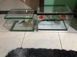 Título do anúncio: Aquario para tartaruga