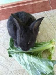 Vendo filhotes de coelhos à 10 reais e tamanhos maiores valor à combinar