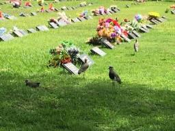 Jazigo cemitério jardim da saudade i