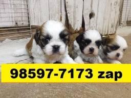 Canil Lindíssimos Filhotes Cães BH Shihtzu Maltês Pinscher Lhasa Beagle Yorkshire Pug