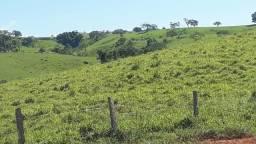 Fazenda em Curraleiro / Patos de Minas