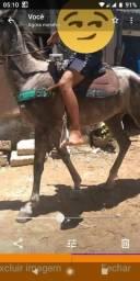 Gente me ajuda cavalo roubado