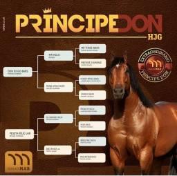 Cobertura de cavalo, Príncipe Don HJG