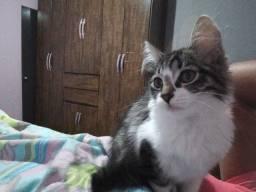 Título do anúncio: Filhote de gato fêmea