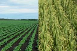 P>Arrendo fazenda para eu plantar arroz e soja no Rio grande do sul.
