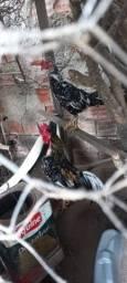 Título do anúncio: galinhas de capoeira
