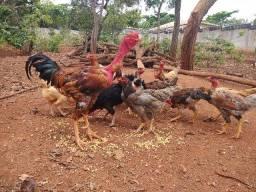Título do anúncio: Vendo galinhas e frangas caipiras