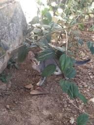 Doação de filhotes de gatinhos