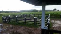 Fazenda Pecuária Top em Rondon do Pará