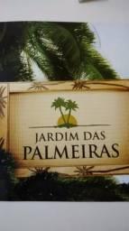 Jardim das palmeiras 1