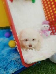 Filhotes de Poodle micro toy