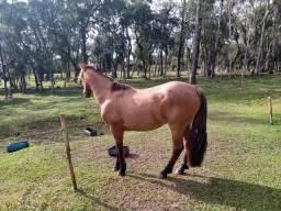 Vendo ou troco cavalo crioulo