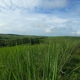 Vendo propriedade 40 km de Maceió