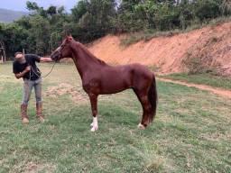Título do anúncio: Cavalo de Marcha picada registrado