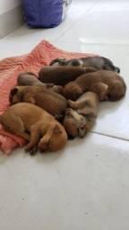 Título do anúncio: Doação de cachorros