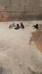 Título do anúncio: Gatinhos p/ adoção.