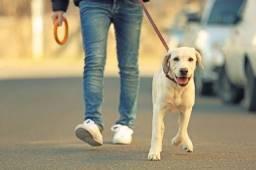Posso ser o passeador do seu cão