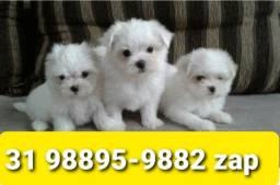 Título do anúncio: Cães Filhotes Alto Padrão BH Maltês Yorkshire Beagle Lhasa Shihtzu Basset