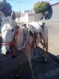 Vendo égua em Marília sp