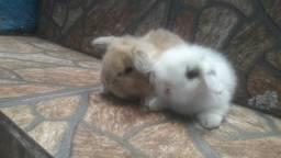 Coelho fuzzy lop