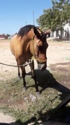 Cavalo estradeiro 3800