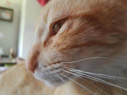 Gato carinhoso companheiro