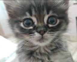 Título do anúncio: Doa-se gatinho resgatado