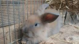 Mini coelha Fuzzy lop