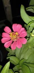 Flores pra casa