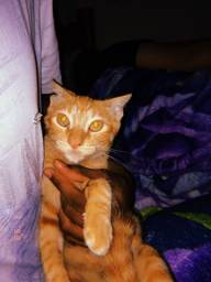 Gato Dócil