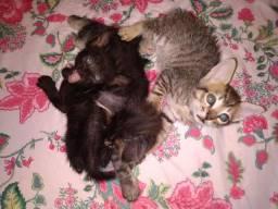 Doa-se filhotes de gatos!