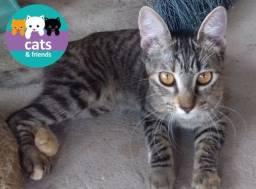 Título do anúncio: Linda gatinha filhote para adoção