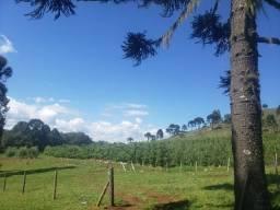 Título do anúncio: Terreno em Urupema com pousada e chácara de maçãs