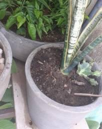 Vamos Renova Os Vaso de suas plantinhas