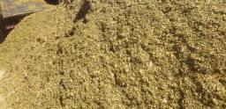 Bagaco  com melado   silo  de milho  cama de frango esterco de galinha palha de arroz