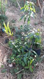 Mudas de Vários tipos de plantas