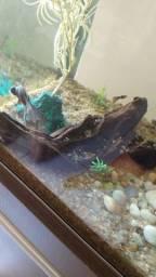 Troncos para aquário