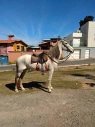Título do anúncio: Vendo cavalo selado