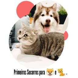 Curso Primeiros Socorros para Cães e Gatos - Online em Vídeo