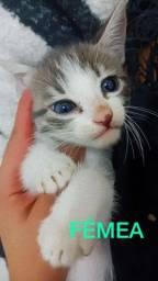 Título do anúncio: Filhotinhos de Gato